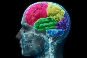 Brain Injury Toolkit